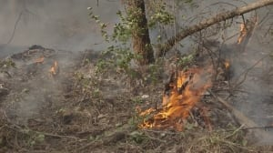 Thunderstorms, strong winds expected in B.C. as crews continue battling wildfires