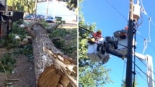 Enmax downed trees
