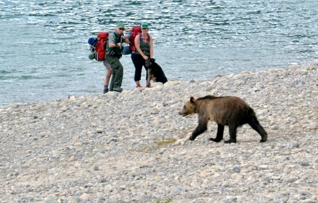 Barrier Lake grizzly