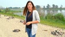 Meghan Jenkins dead geese