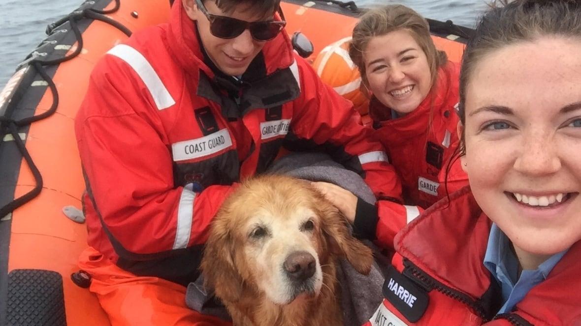 Rescue Dogs New Brunswick Canada