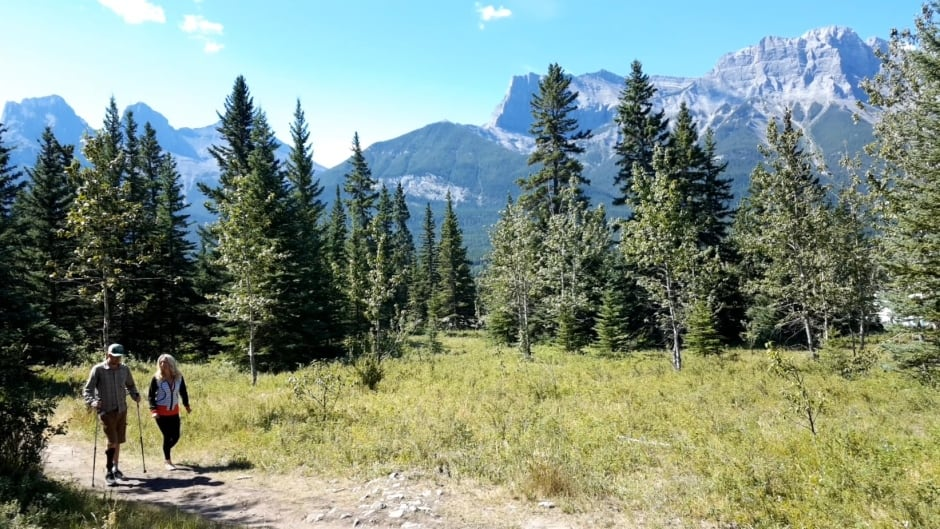 A wooded walking trail in Canmore, Alta.