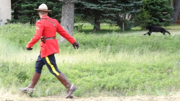 "'It was a once-in-a-lifetime shot to get an RCMP in his dress uniform with a black bear,"" Damian Gillis tells CBC News."