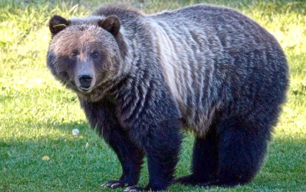 Bear 148 Profile 20170727