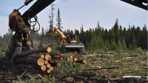 Williams Lake city councillor worries time running out to salvage B.C.'s wildfire-damaged timber