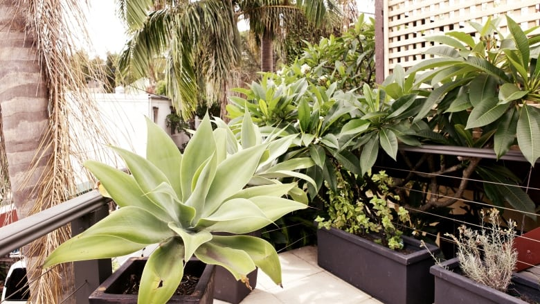 8 Tips To Turn Your Tiny Balcony Into A Lush Garden Cbc Life
