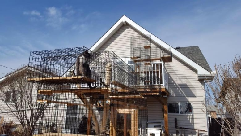 Perfect The Edmonton Couple Have Built Some Towering Cat Patios, Including This  U0027doubleu0027 Design, Which Includes An Extensive Network Of Tunnels And Ramps.