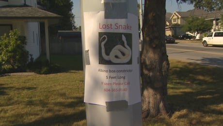 boa missing in Fleetwood park
