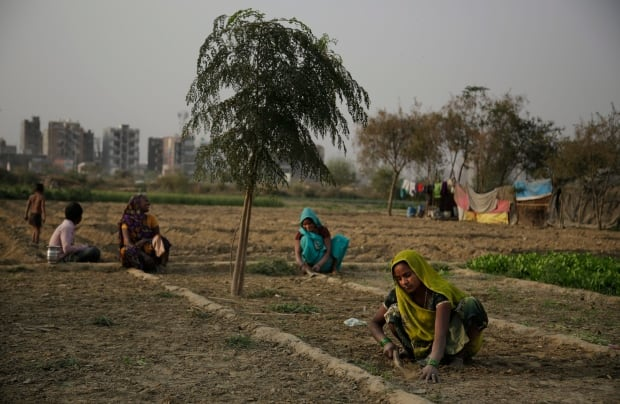 India Farmer Suicides