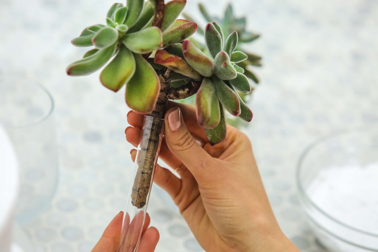 Easy Diy Fresh Floral Or Succulent Wedding Cake Toppers Cbc Life