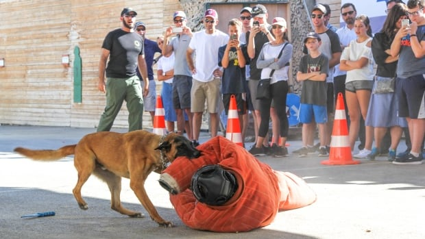 Participants at the counterterrorism boot camp watch as an attack dog subdues a mock assailant during a demonstration.