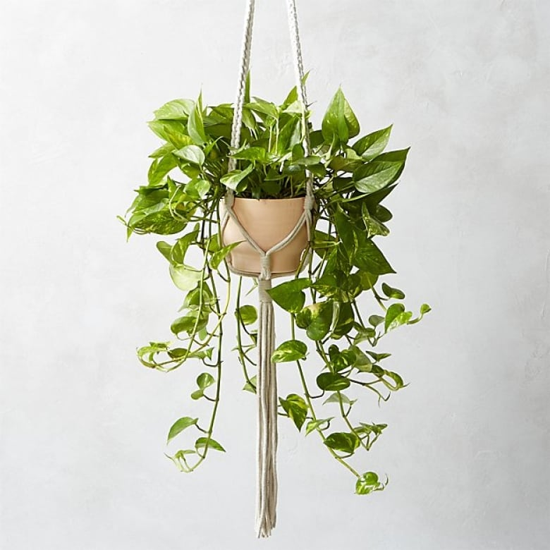 20 Beautiful Hanging Planters That Will Make You Want To Live In A