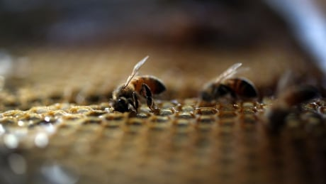 a bad feeling in the pit of my stomach bees vanish from brock research project