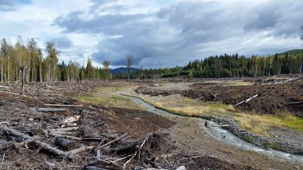 Mount Polley site - Hazeltine Creek
