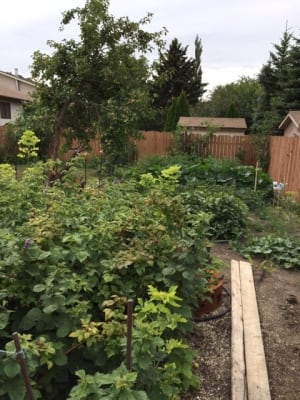 Ray Allen garden Regina SaskTel