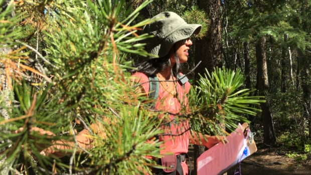 Tessie Aujla shows off a lodgepole pine during a guided walk.