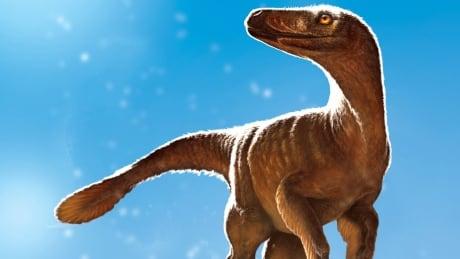 Dino Hip Discovery 20170808