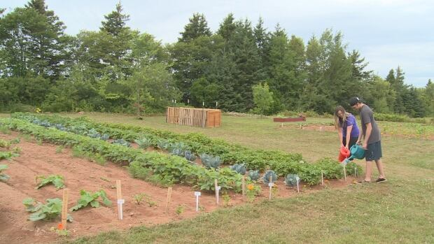 High school students are growing a garden in Morell Regional High School's backyard.