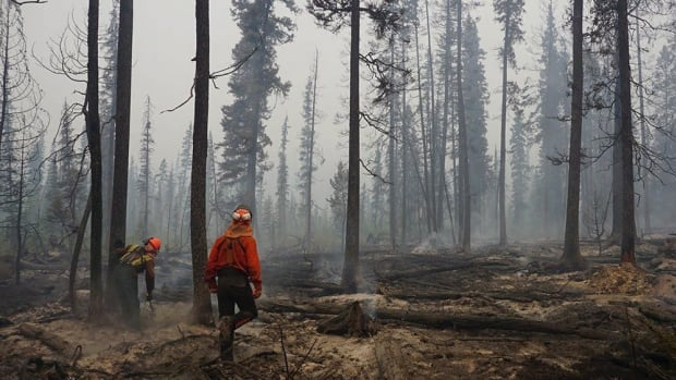 Fire crews assess and fall danger trees in the southwest section of the Verdant Creek wildfire near Highway 93S in a handout photo from Parks Canada.