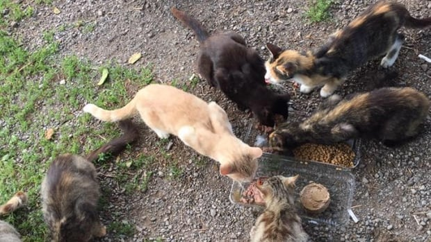 "Volunteer Marsha Locke took this photograph on her first visit to the property, when she said ""a bunch of cats swarmed me, begging for food like I've never heard before."""