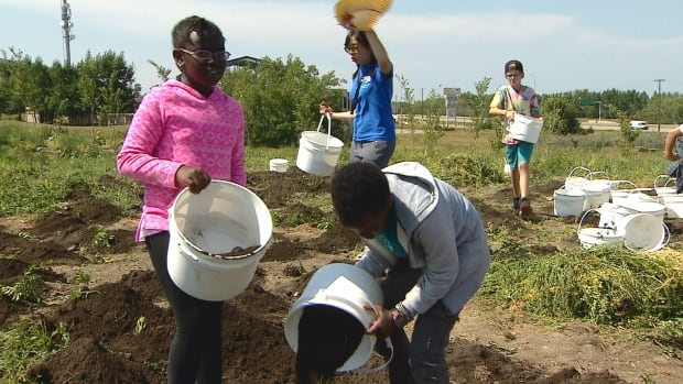 Young Calgarians get connected to agriculture at a farm camp this week.
