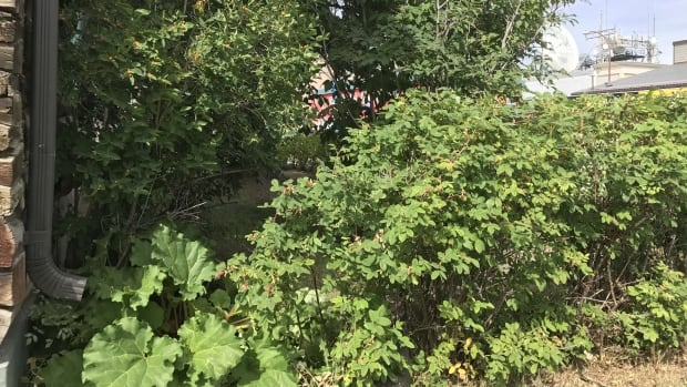 While people generally think of hanging nests as the homes for stinging insects like yellow jackets and hornets, they also often nest underground and in bushes and trees.