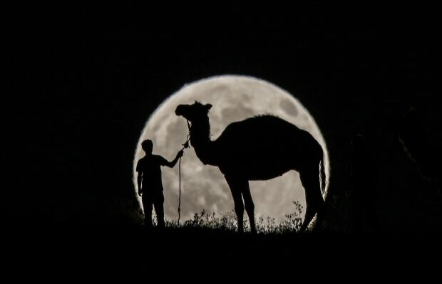 Turkey Partial Lunar Eclipse man walks with his camel