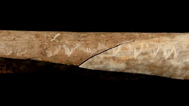 A prehistoric forearm bone appears to have been disarticulated, filleted, chewed, and then engraved with a zig-zag design before being broken to extract bone marrow, said scientists from Britain's Natural History Museum.