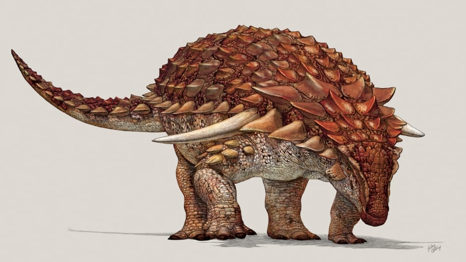 Artist's reconstruction of the new armoured nodosaur.  The red coloration on top, and light coloured belly is an example of simple countershading camouflage