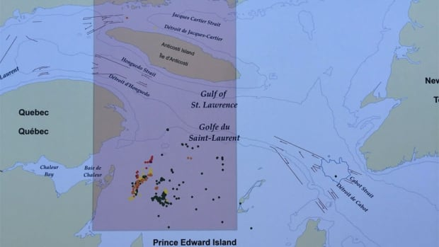 Aerial and boat-based North Atlantic right whale sightings, Gulf of St. Lawrence