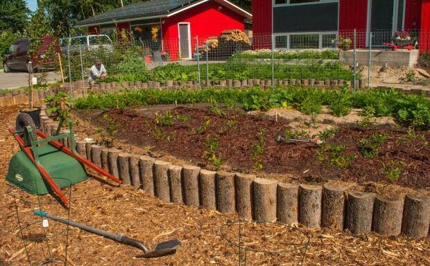 Dustin Doerntlein garden