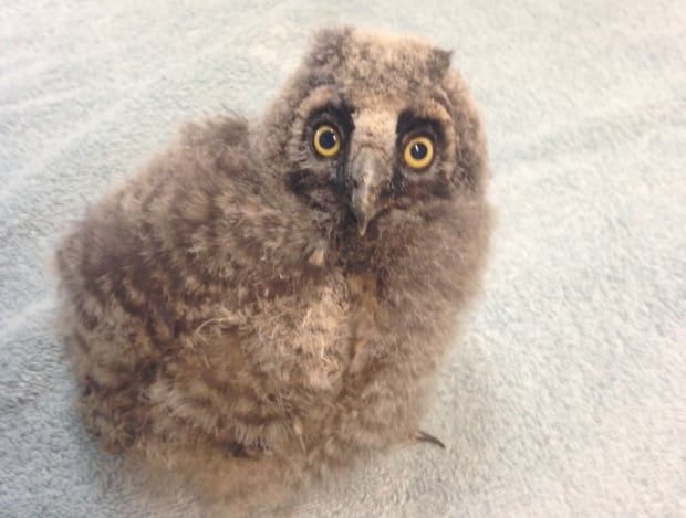 OWL Orphaned Wildlife
