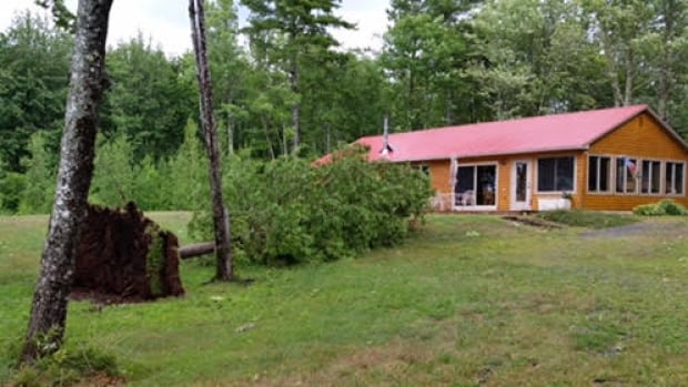 A violent wind storm downed several trees at a cottage at Grand Lake Sunday afternoon, while almost ignoring neighbouring properties.