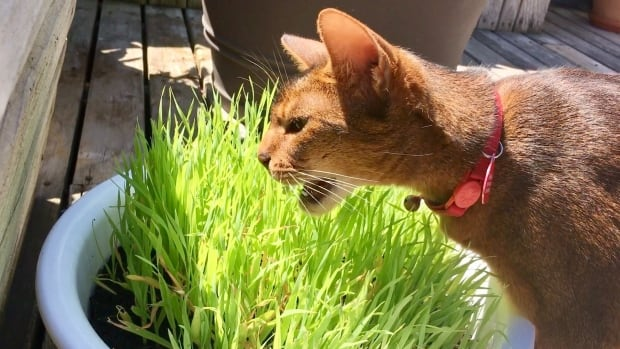 Elgharib's cat
