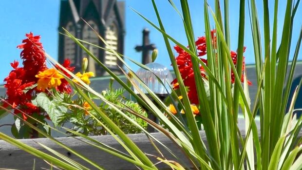 Flowers on rooftop garden