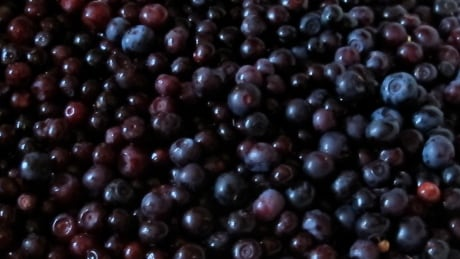 Wild huckleberry pickers stripping B.C. of bounty bears need, warn environmentalists
