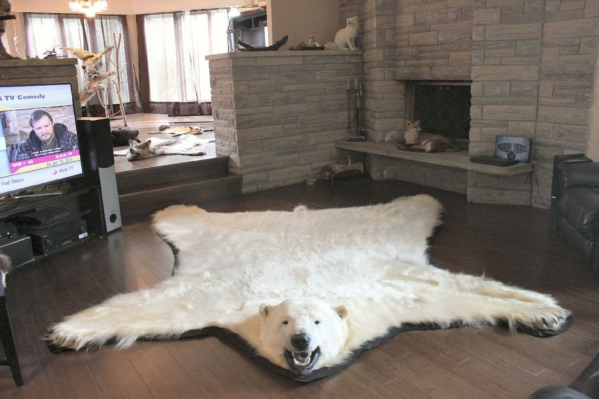 Wolf Rugs On Kijiji Carpet Vidalondon