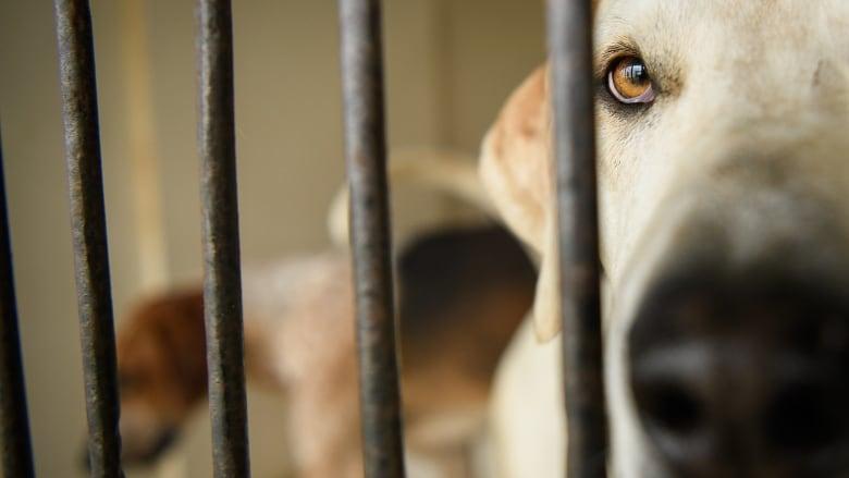 Dog Attacks Statistics Canada