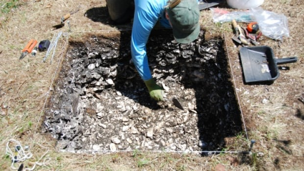 An old shell midden (waste heap) is investigated at Port Joli, N.S., as part of the E'se'get Archaeology Project, which ran from 2008-2012. Archeologists are trying to preserve more sites on the South Shore before they're claimed by erosion.