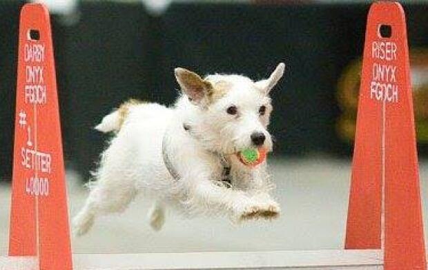 Charlie hero dog jumping