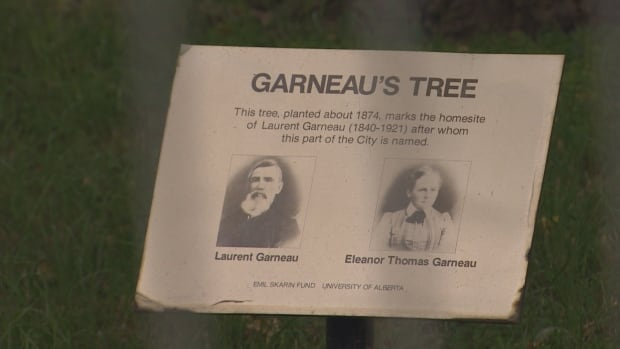 Garneau Tree