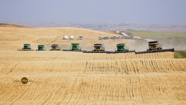 The non-profit organization harvested 112 acres of Durum Wheat and will be donating all the proceeds from the crop.