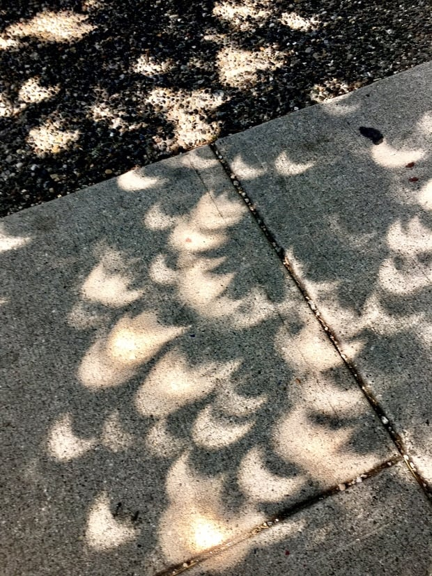 Eclipse through the leaves