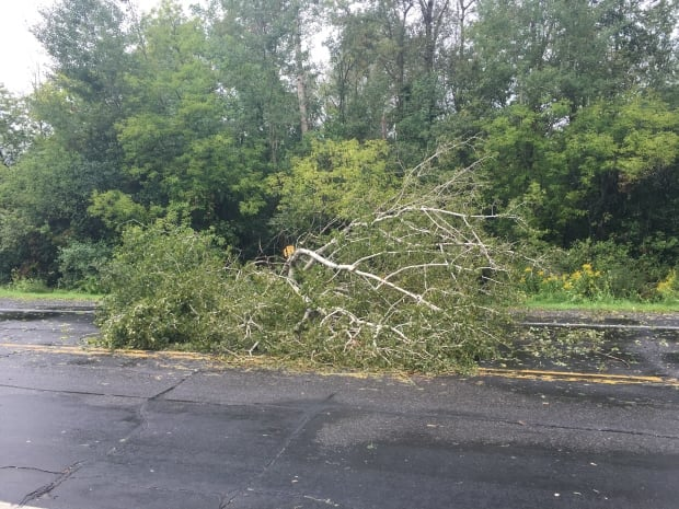 Downed tree on Airport Parkway in Ottawa Aug. 22, 2017
