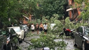 Powerful winds rip apart trees, smashing cars and blocking roads in Montreal