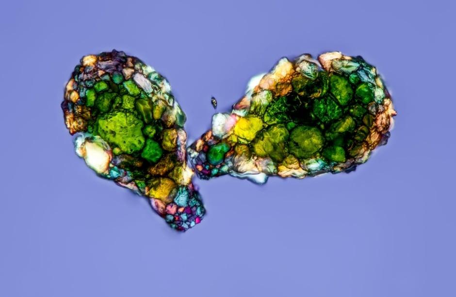 Amoeba Shells, Gerd Guenther