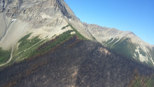 A section of forest burned by the Verdant Creek wildfire, as seen from a helicopter on Aug. 22, 2017.