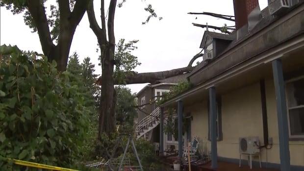 house tree damage