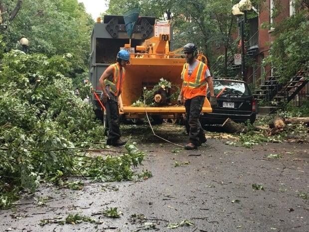 Tree cleanup St-Henri