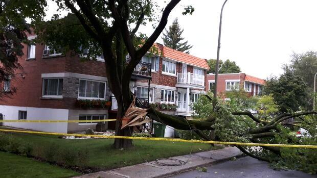 ahuntsic tree fallen storm